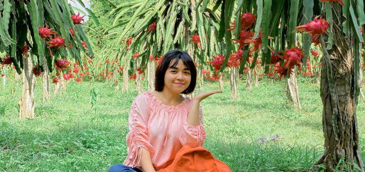 Vườn thanh long ruột đỏ của chú Sự - Tịnh Biên