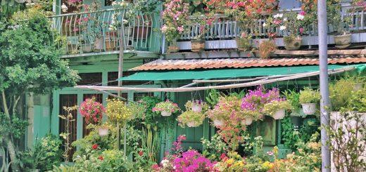 Căn nhà đầy hoa ở Long Xuyên