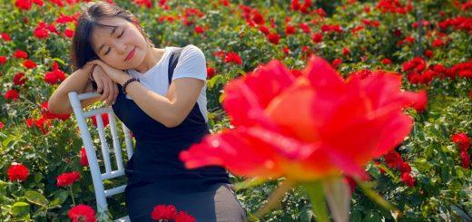 Cánh đồng hoa Thiên Anh Châu Đốc