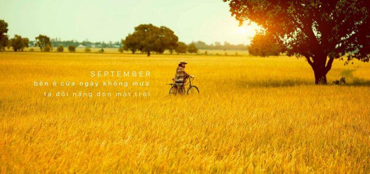 Mùa lúa chín vàng cánh đồng Tà Pạ