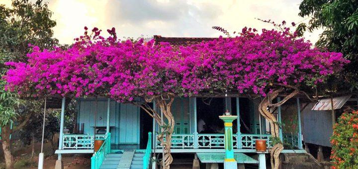 Nhà sàn hoa giấy Phú Tân