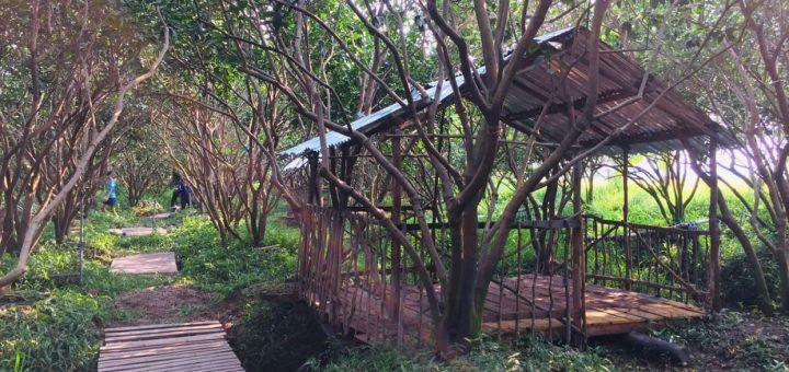 Vườn cam 8 Công - Vĩnh Trạch